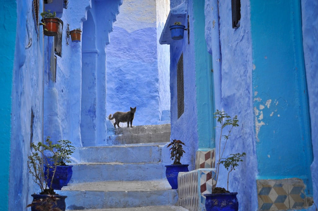 A cat wandering the streets of Chefchaouen