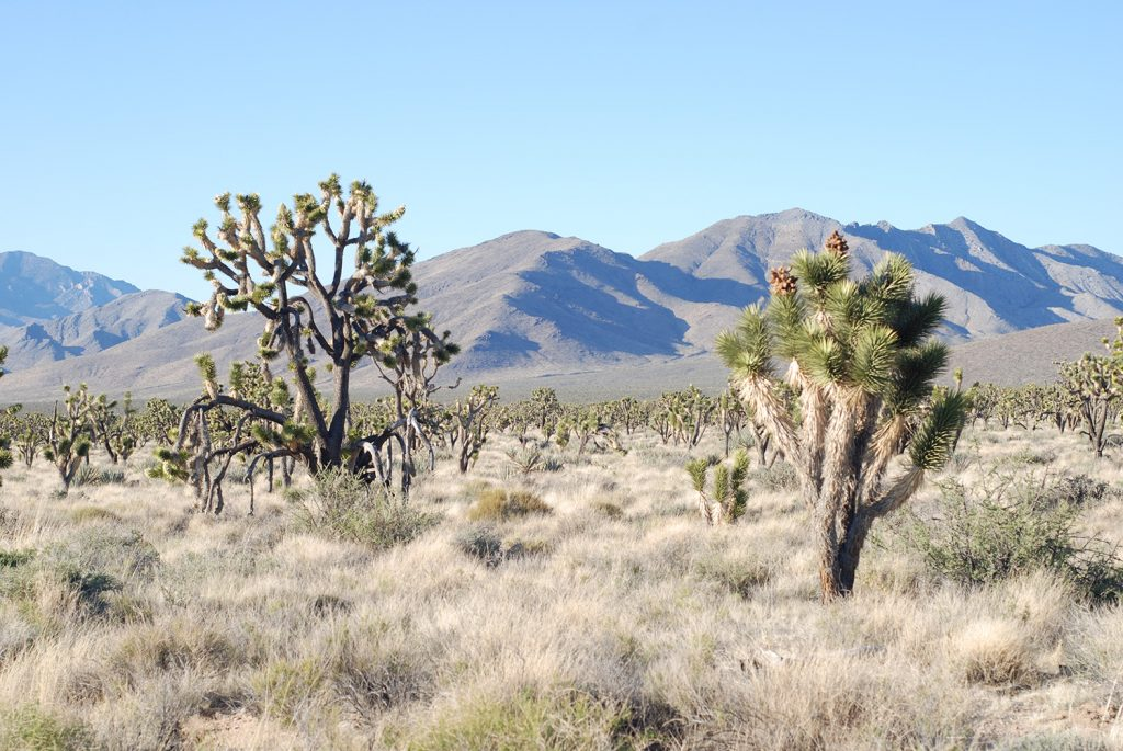12 Must-Do Day Trips From Las Vegas