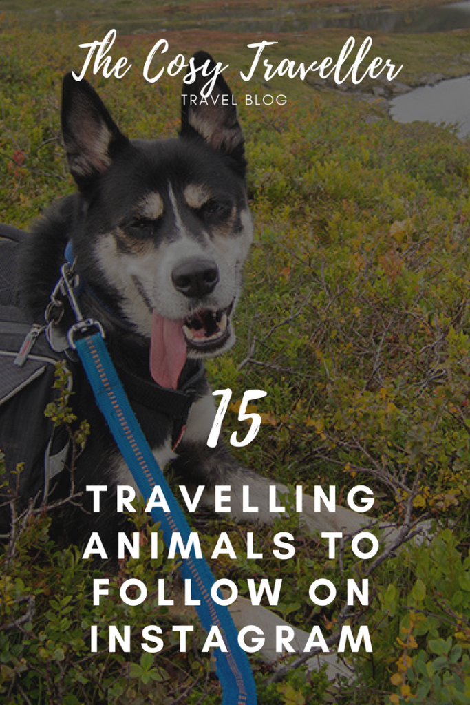 15 Travelling Animals to Follow on Instagram