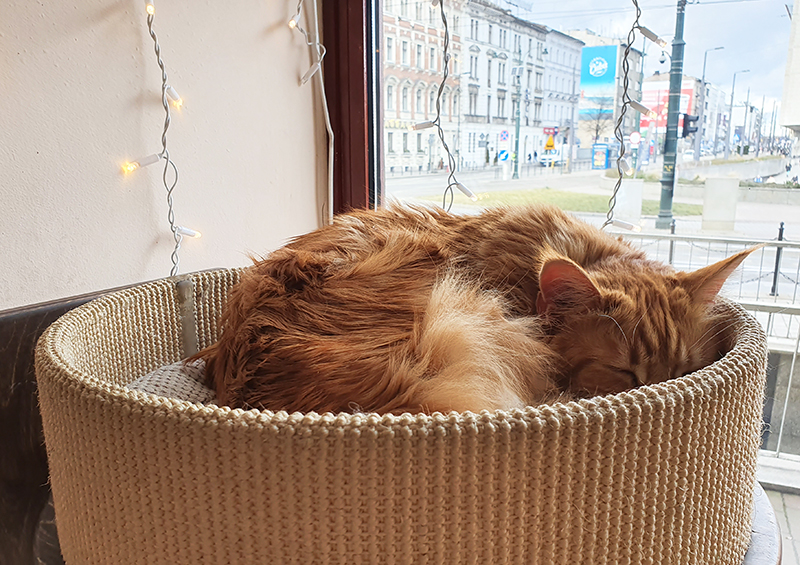 quirky things to see and do in krakow poland including the cat cafe