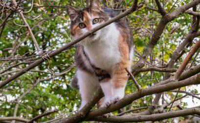 cat-736419_1280